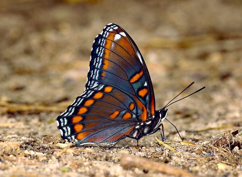 See a beautiful tropical butterfly while traveling for dental care in Costa Rica